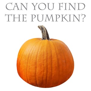 Find The Pumpkin On Our Website